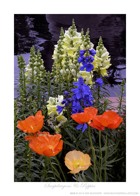 Snapdragons Amp Poppies Photo By Ken Buckner