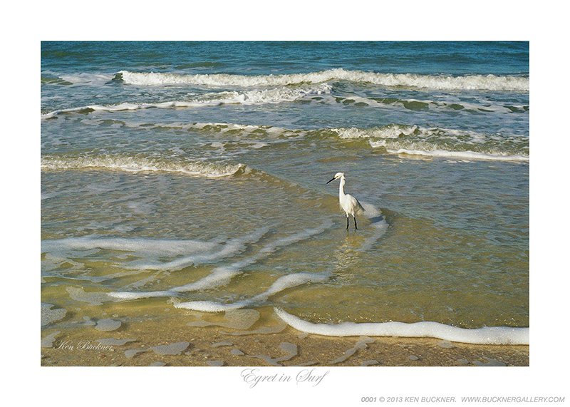 Egret In Surf Photo By Ken Buckner