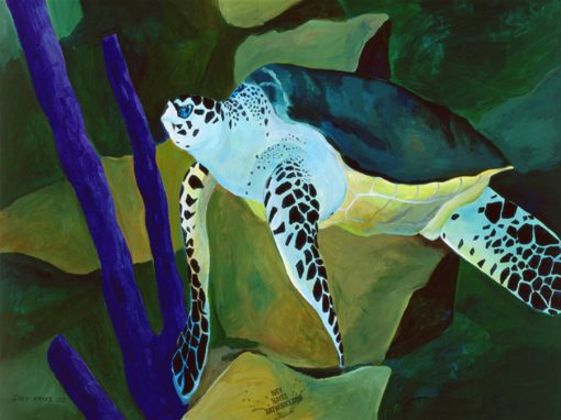 Loggerhead Turtle by Ivey Hayes