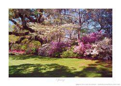 Spring Ken Buckner