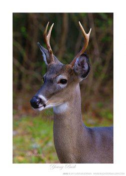 Young Buck Ken Buckner