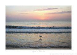 Egret at Sunrise Ken Buckner
