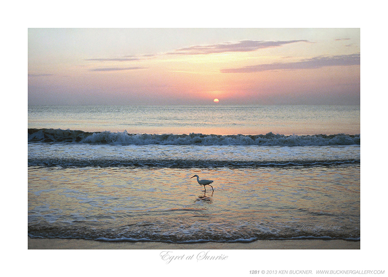 Egret at Sunrise Ken Buckner
