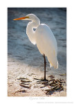 Egret in Blue Ken Buckner