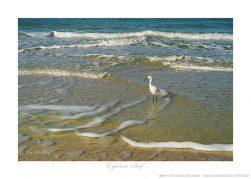 Egret in Surf Ken Buckner