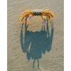 Ghost Crab Shadow Ken Buckner