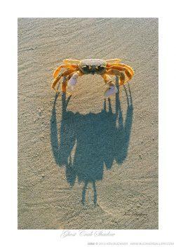 Ghost Crab Shadow Ken Buckner