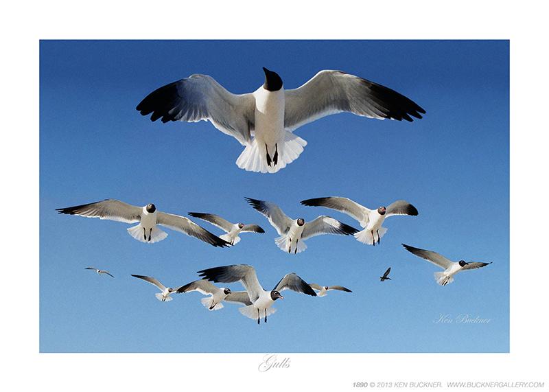 Gulls Ken Buckner