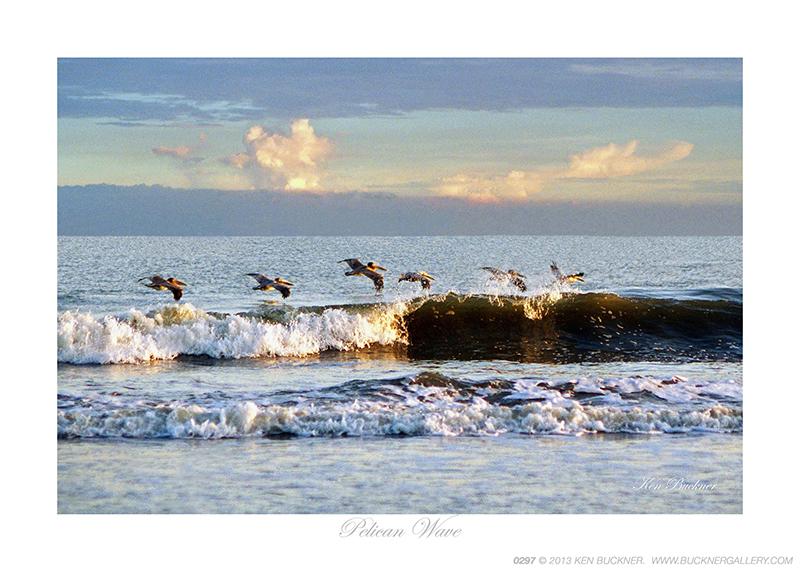Pelican Wave Ken Buckner
