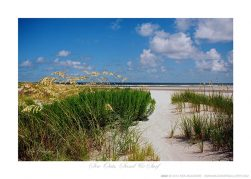 Sea Oats, Sand & Surf Ken Buckner