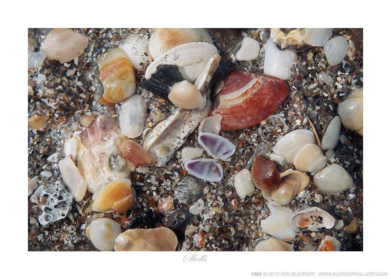 Shells Ken Buckner