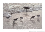 Silver Surf & Shorebirds Ken Buckner