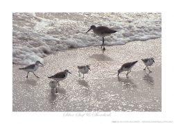 Silver Surf & Shorebirds Ken Buckner