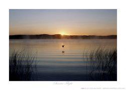 Sunrise Flight Ken Buckner