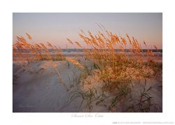 Sunset Sea Oats Ken Buckner