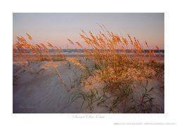 Sunset Sea Oats Ken Buckner