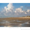 Birds, Clouds, & Low Tide Ken Buckner