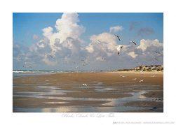 Birds, Clouds, & Low Tide Ken Buckner