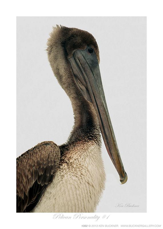 Pelican Personality #1 Ken Buckner