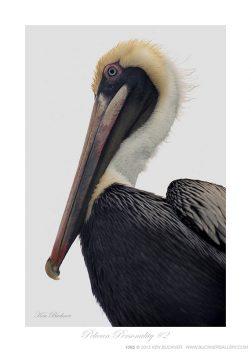 Pelican Personality #2 Ken Buckner