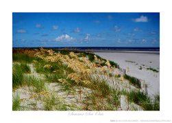 Summer Sea Oats Ken Buckner