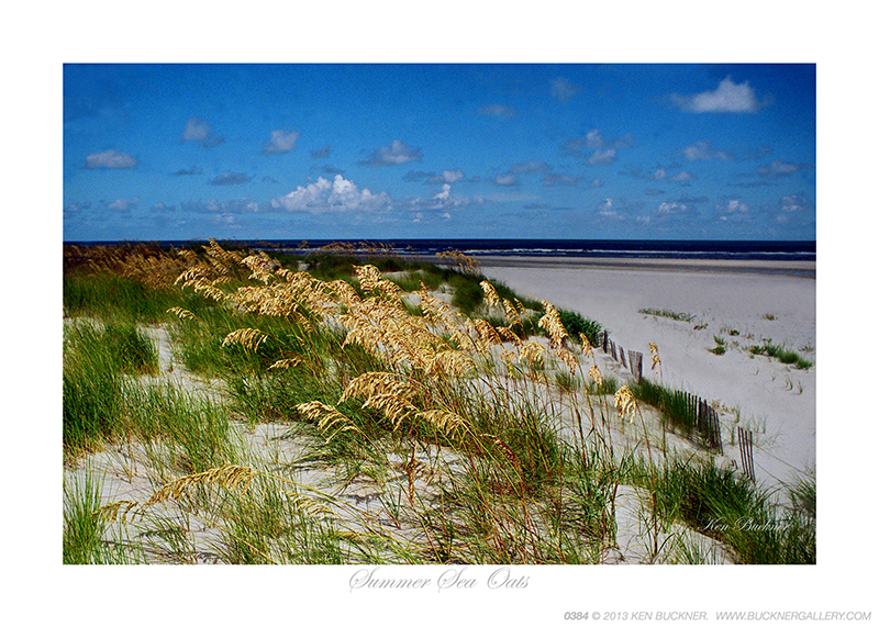 Summer Sea Oats Ken Buckner