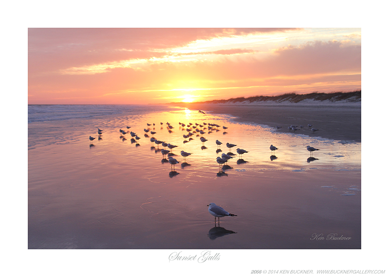 Sunset Gulls Ken Buckner