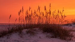 Sunset Grass Photo by Dwayne Schmidt