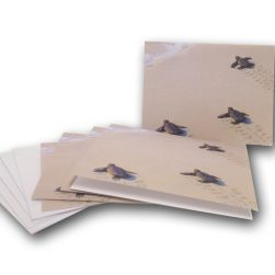 steps-to-the-sea-horizontal-notecards-miller-pope