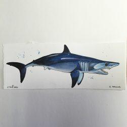 mako-shark