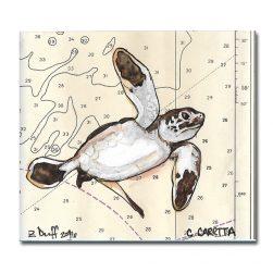 Zak Duff Baby Sea Turtle