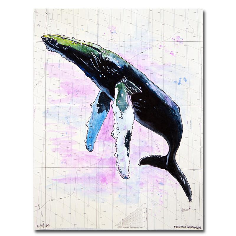 Zak Duff Humpback Whale