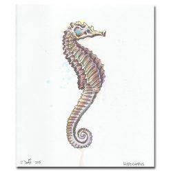 Zak Duff Sea Horse