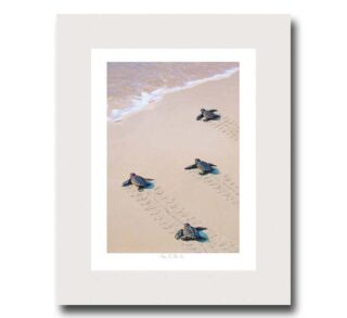 miller-pope-coastal-giclee-prints